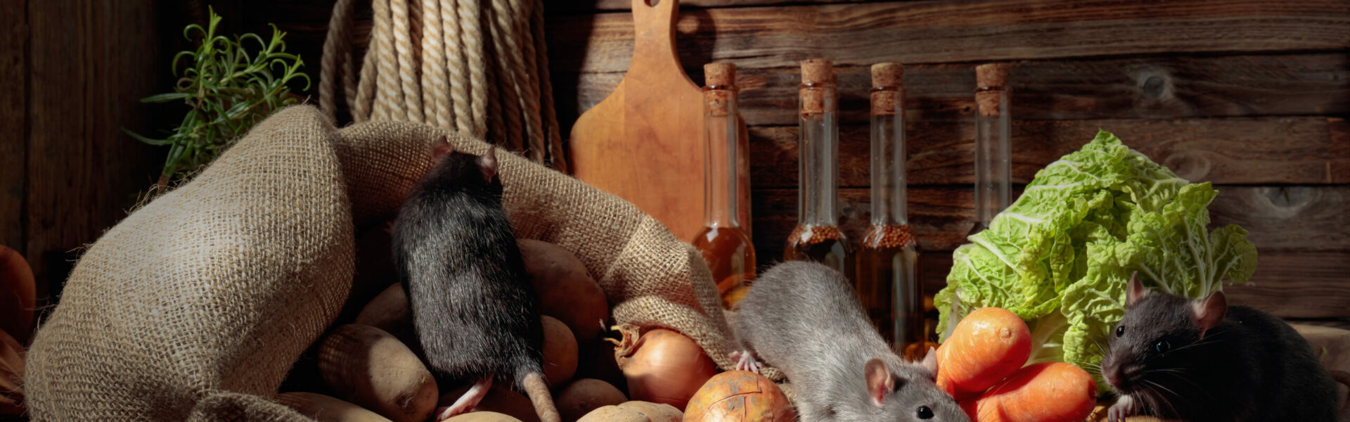 Rats on a old wooden table with vegetables and kitchen utensils.